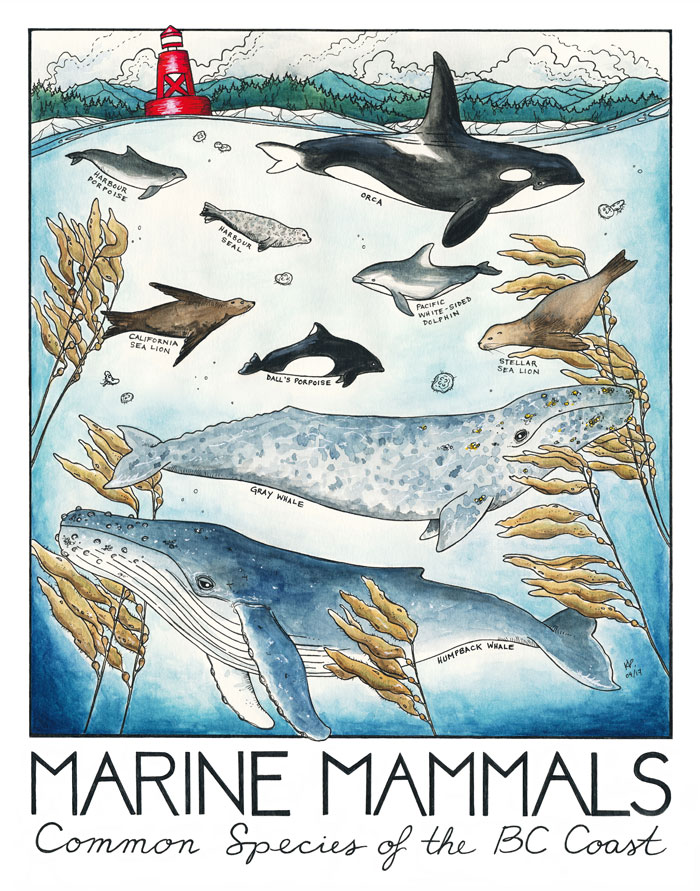 Marine Mammals of the BC Coast, 2017